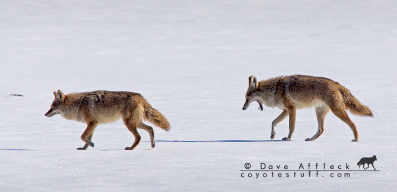 Pair travelling on ice