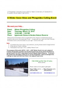 Phragmites Winter Project Poster