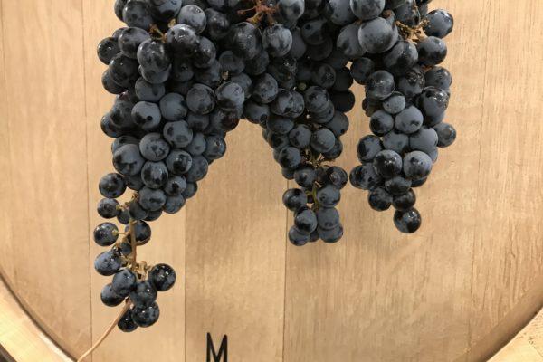 Cabernet Grapes/Barrel