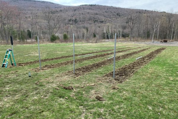 Rows are Tilled for Vineyard at Seven Birches Winery