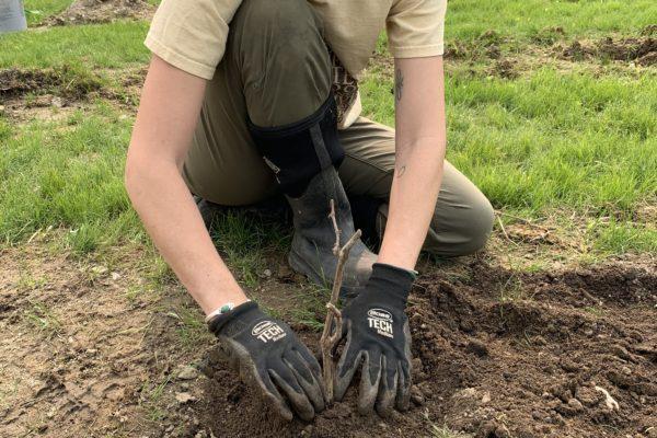 Jillian gets Planting at Seven Birches