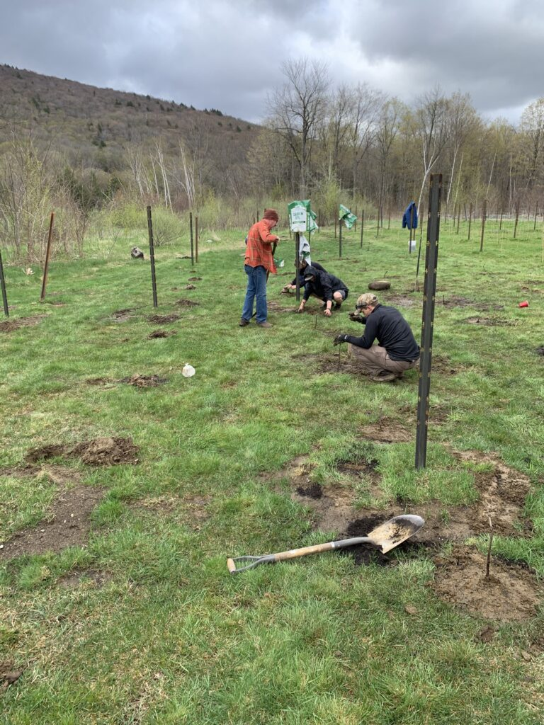 Planting Vines Spring 2021