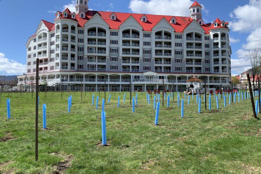 Spring 2021 Vineyard at Seven Birches
