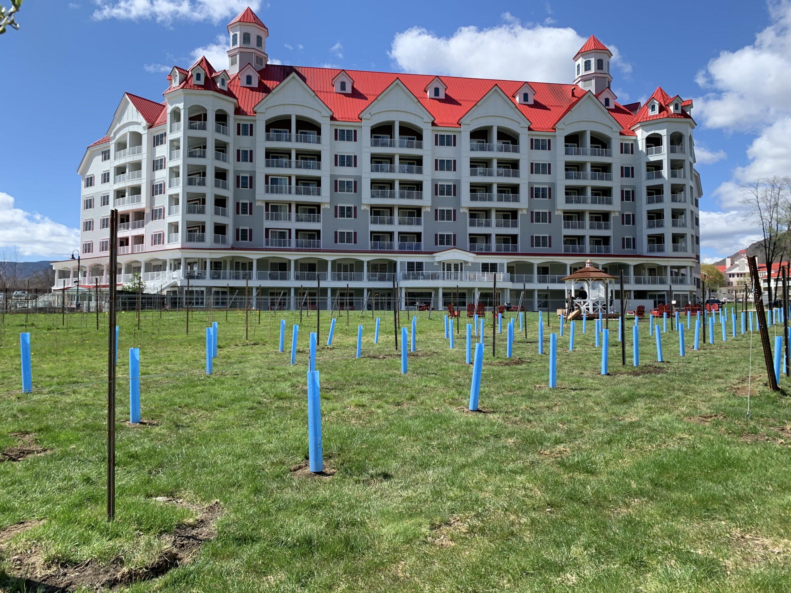 Vineyard Expansion 2021