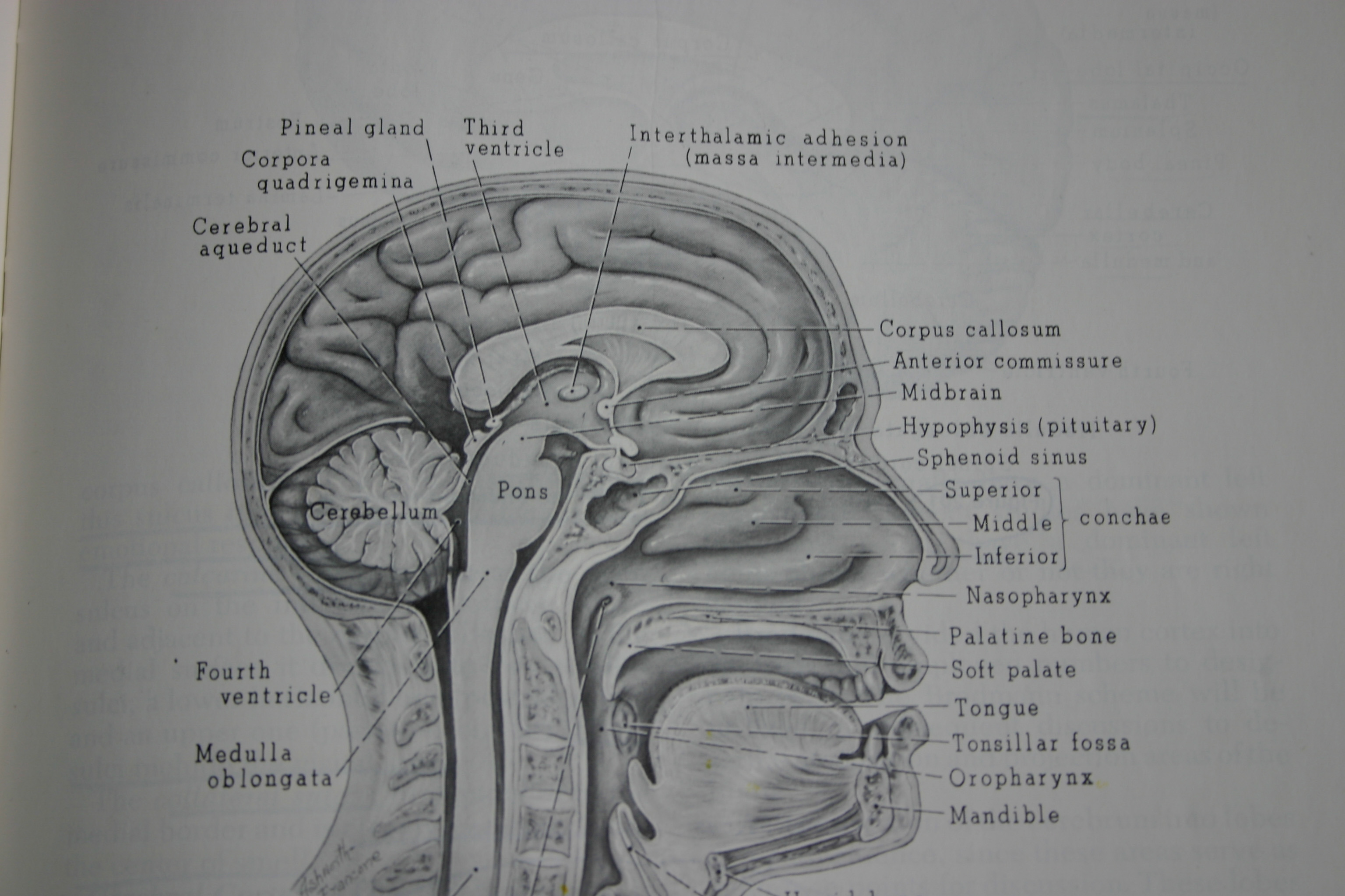 New Post in Brain, Child Magazine