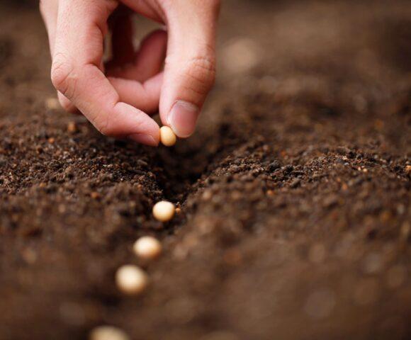 A hand plants seeds.