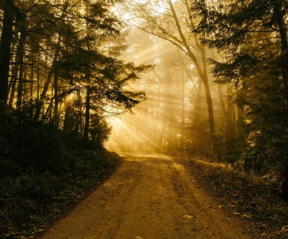 A sunlit path through the woods.
