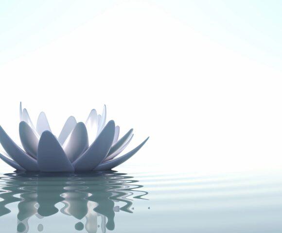 White lotus on water.