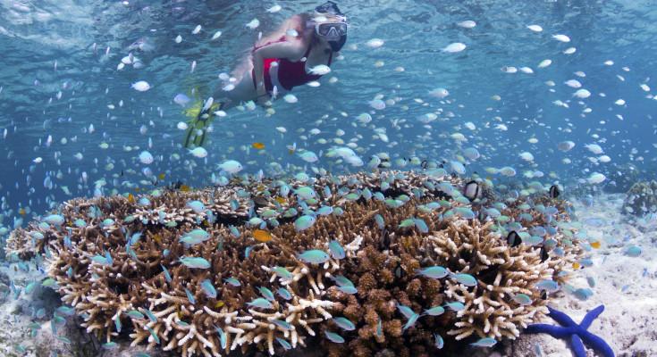 Thriving Coral Reef, Thriving Community:  Wakatobi Resort Conservation