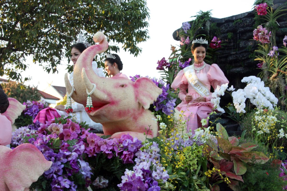 CHIANG MAI:  Rose of Northern Thailand