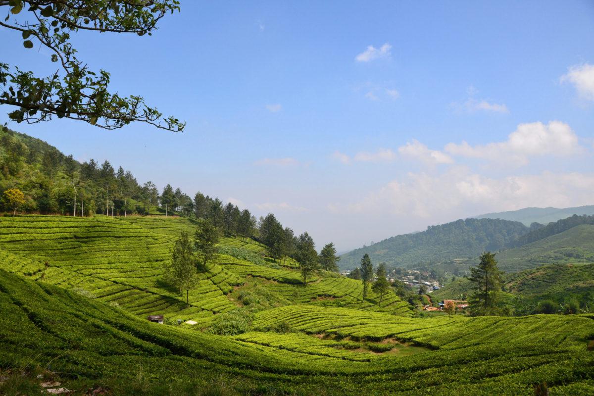 Hiking the Hills around Bogor