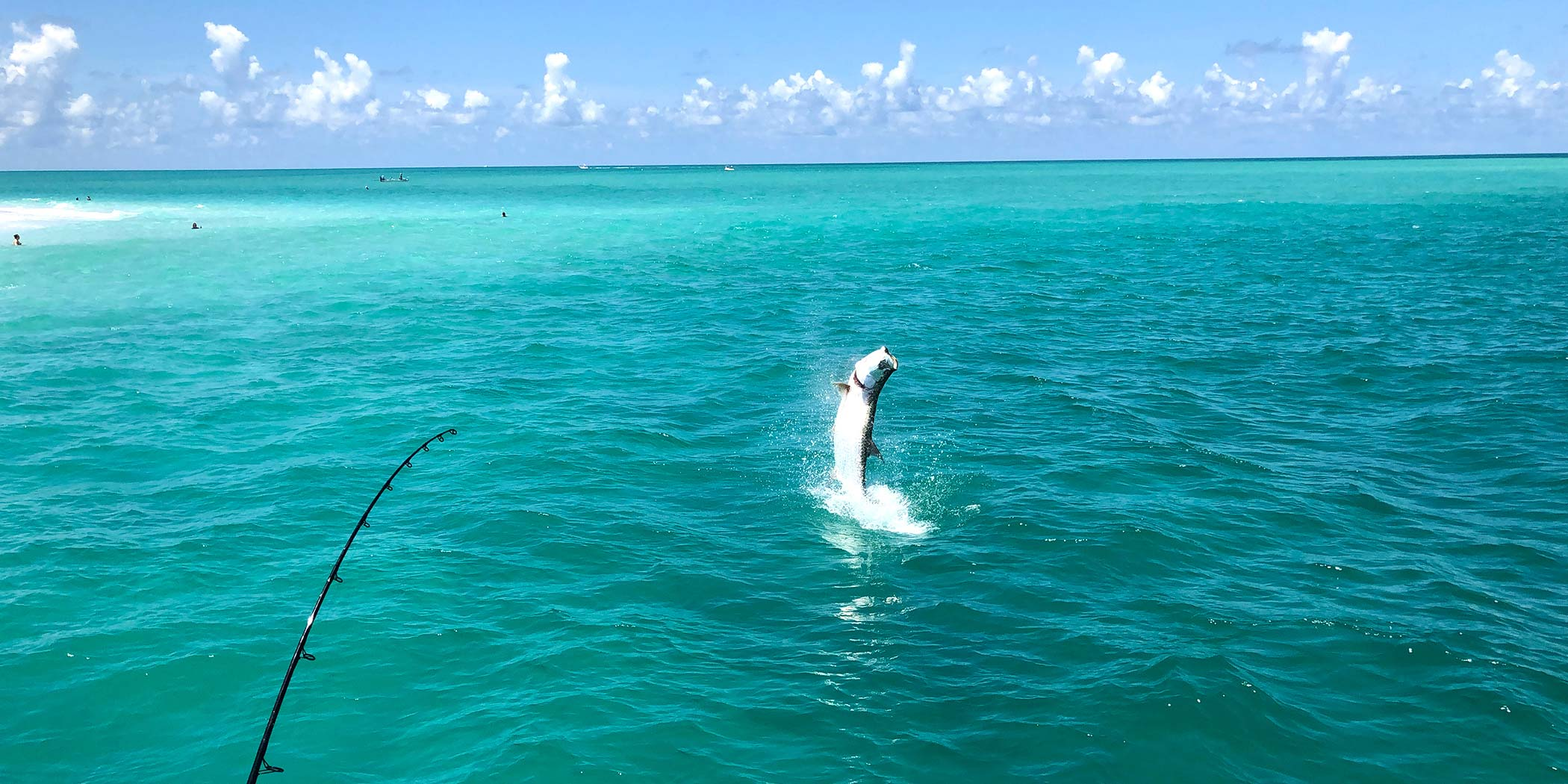 Summer tarpon fishing can include some thrilling acrobatics on the part of the fish!
