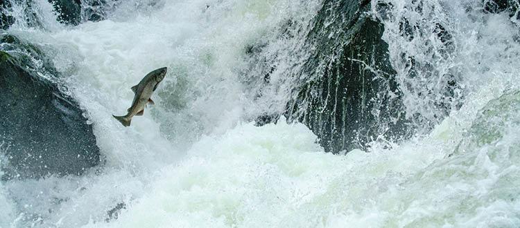 RBP awarded NOAA Fisheries grant