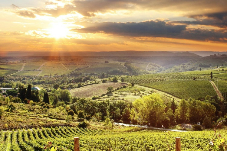 🏆 Dinner in the Chianti Vineyard