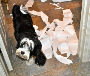 Dog mischief toilet Paper