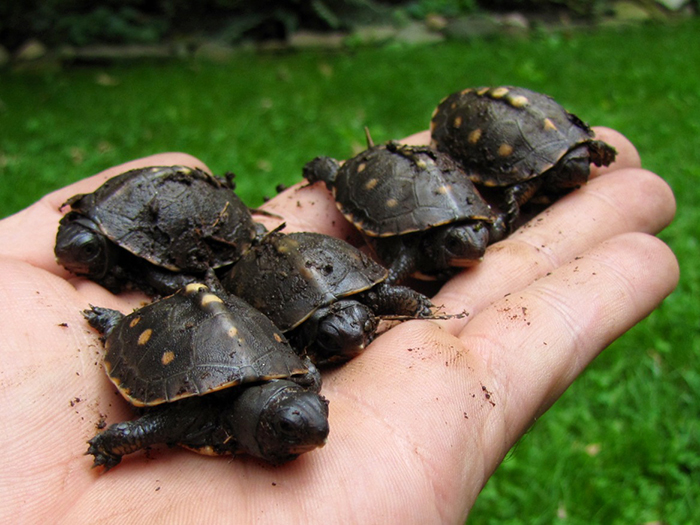 baby-box-turtles-protect