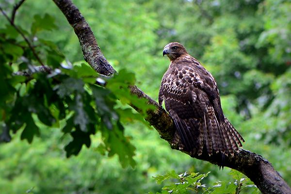 birds-hudson-valley
