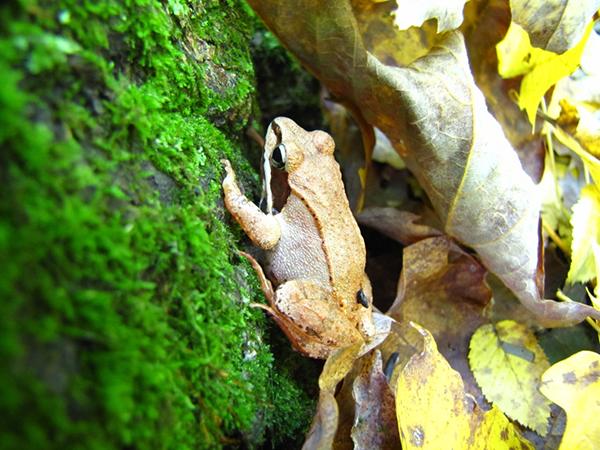 frog-new-york-nature
