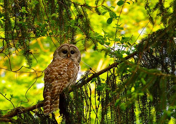 owls-new-york