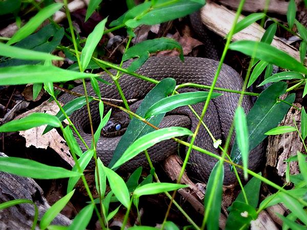 snakes-new-york-upstate