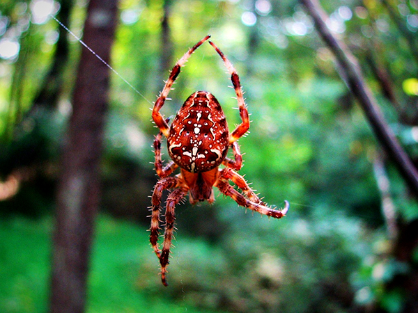 spiders-upstate-new-york