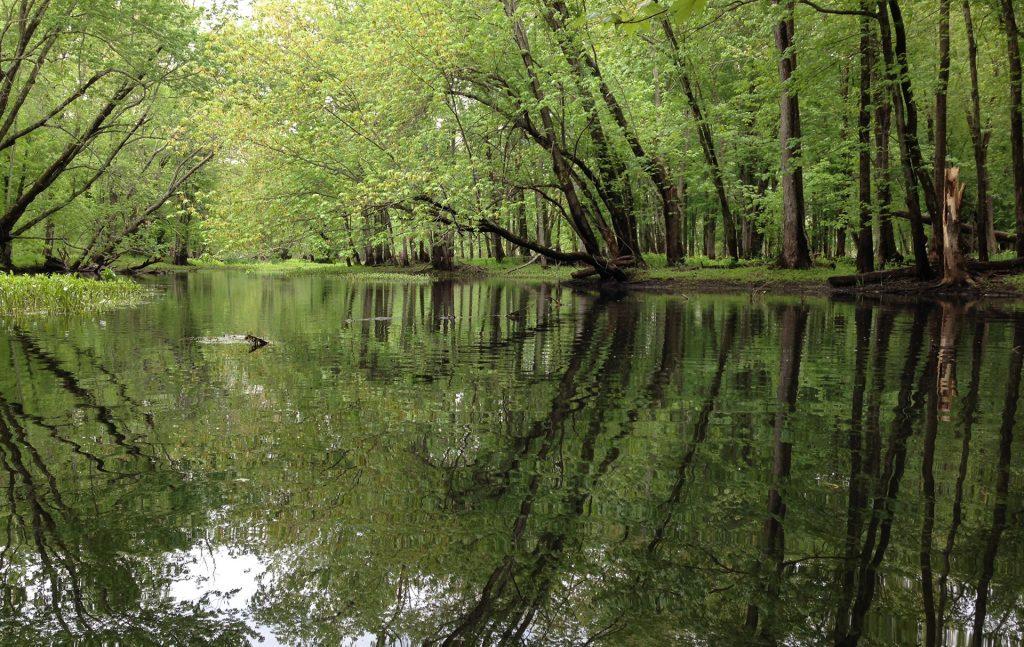swamp-water-views-1920px