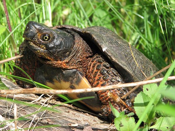 turtle-close-up