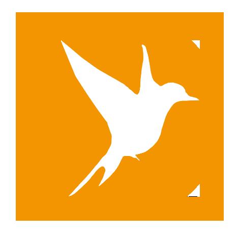 birding-birdwatching-new-york