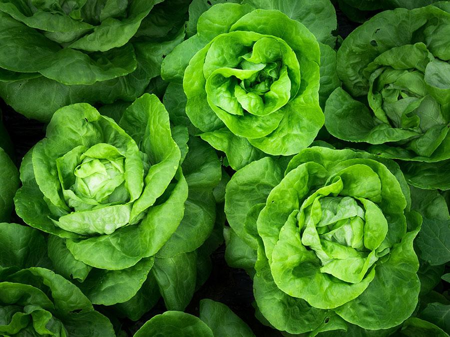 Chef Tony's Organic Bibb Lettuce Wraps