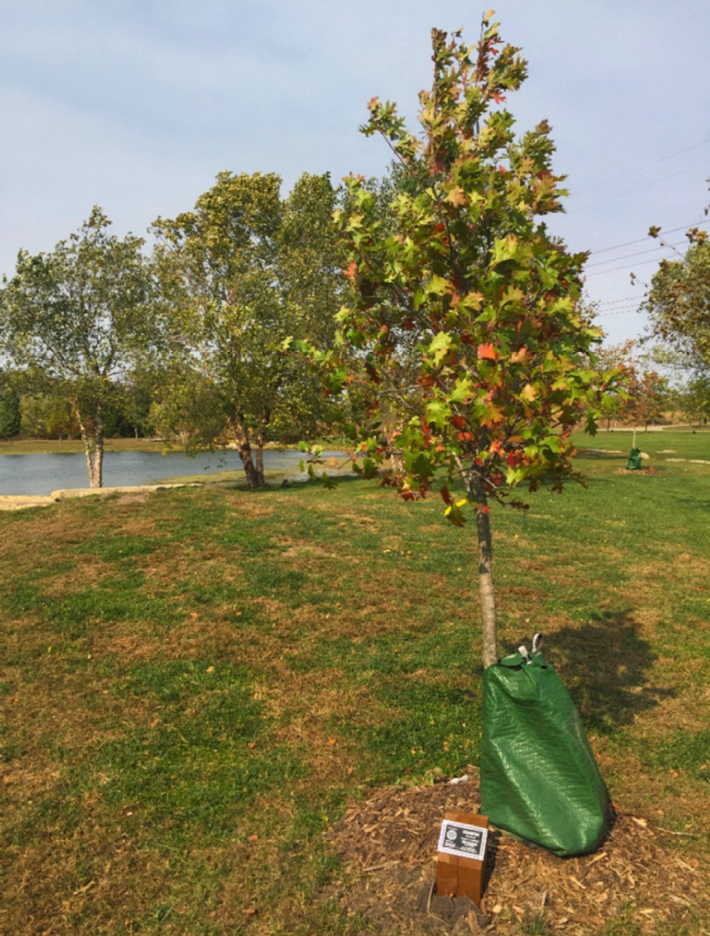 Tree planted in Lawrence's Rotary Arboretum in John's remembrance.