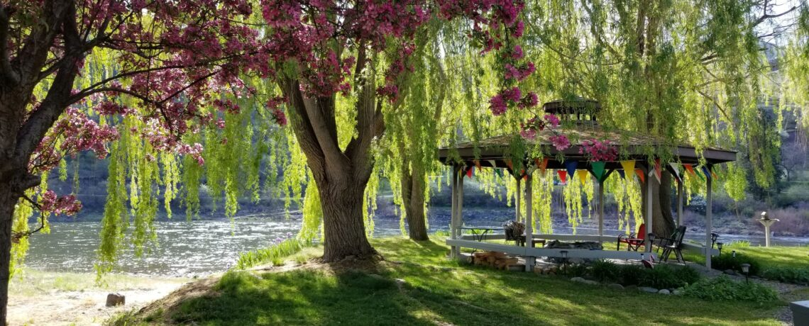 Flowering Crabapple tree and Gazebo