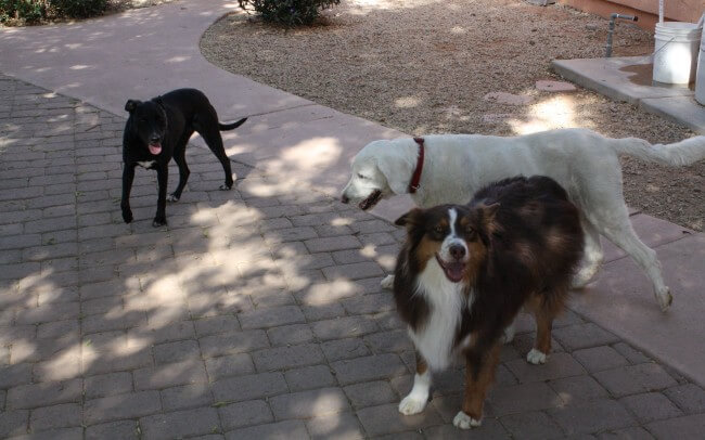 Dog Party in the yard