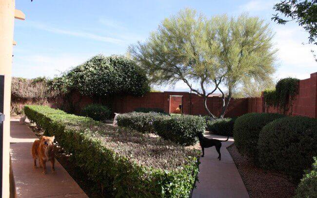 East side courtyard.