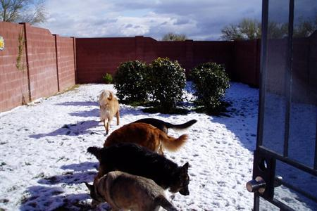 Real snow! It is usually 10' cooler here.