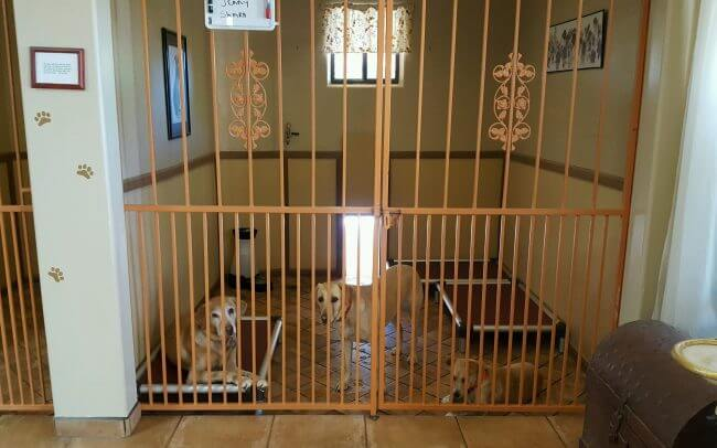 Doggie Day Care Suites