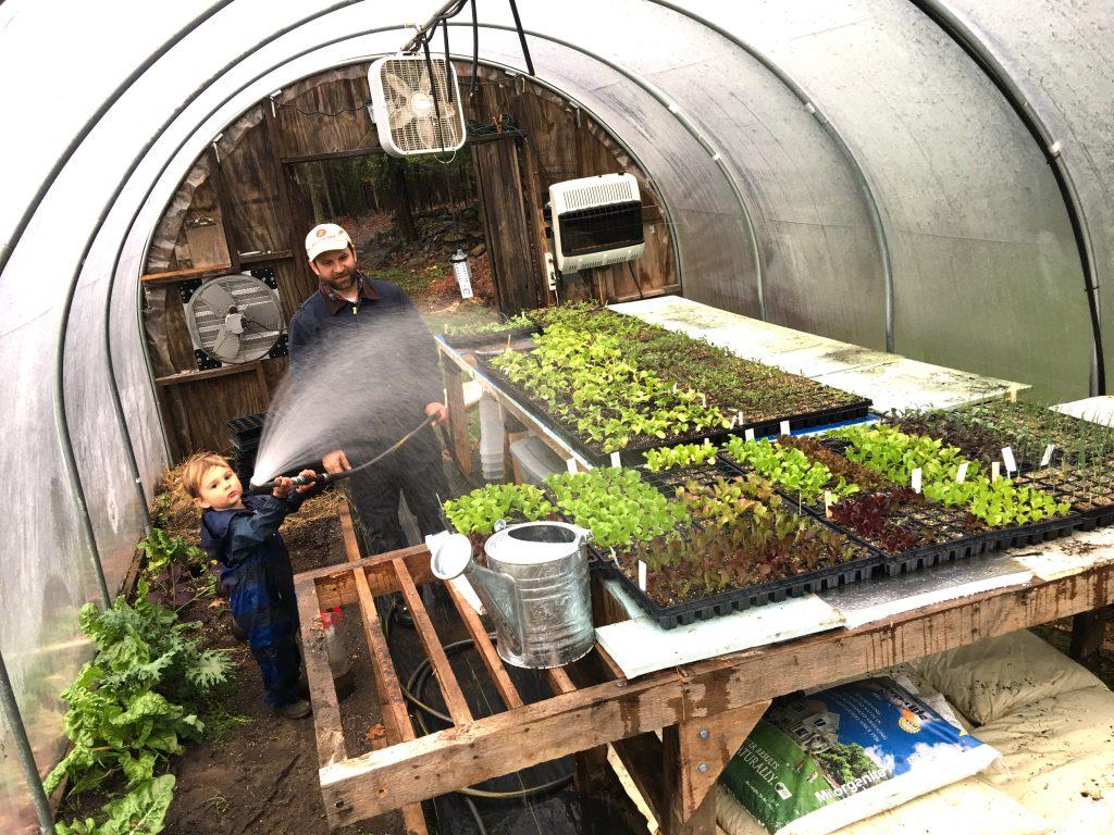 Ravenwood-greenhouse-seedlings