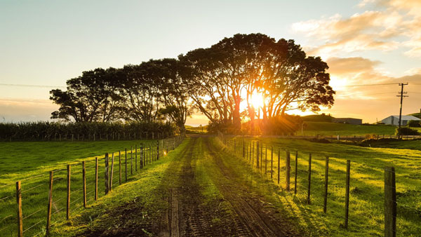 REIG Elise   Investing In Farmland