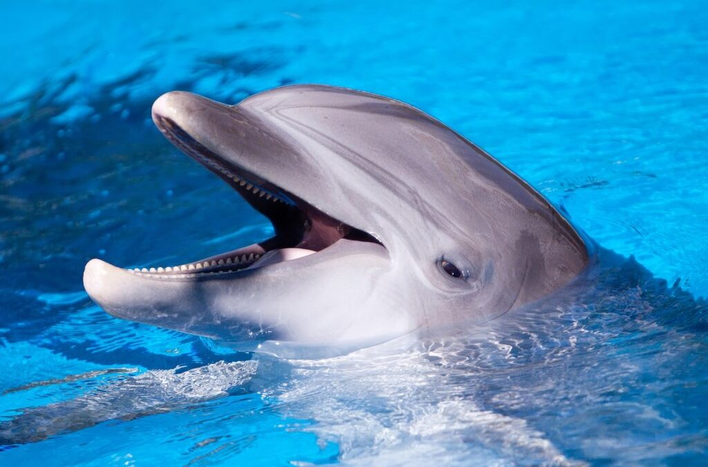 Dolphin Lawyering:  Why I can be an advocate without being a shark