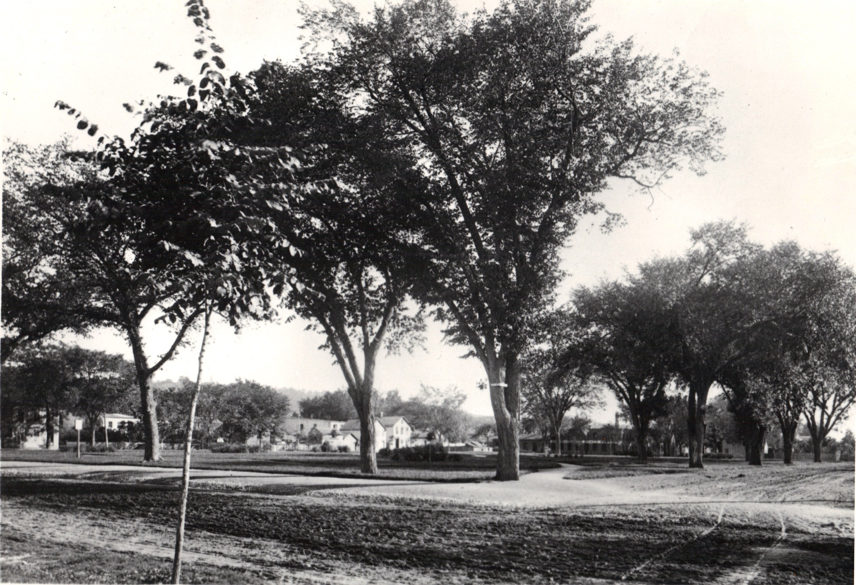 Photo of Village Green showing trees and dirt roads