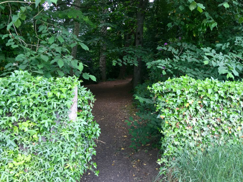 Entrance between hedge leading to woods