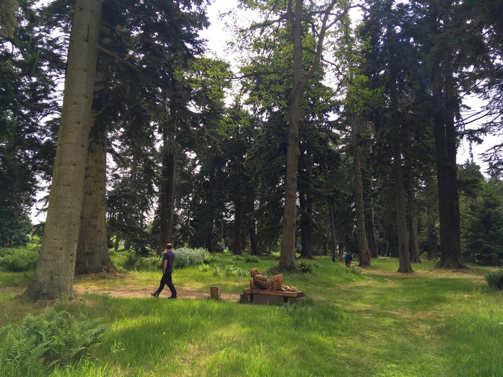 Malcolm walk through tall trees