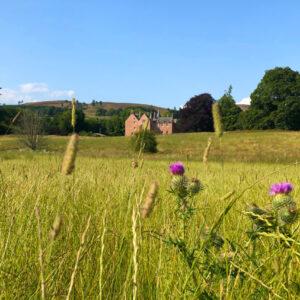 Bamff House in rewilding field