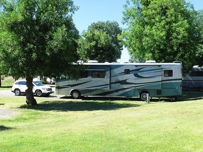 Winter is over so we drove from Wilderness Lakes Thousand Trails to Bakersfield ca. about 5 hour rv driving.  https://www.bearmountainrv.com/. The park is mostly a parking lot with 50 amp water and sewer but only set us back $27.00 for the night.  The second stop was Tulare California in a rest area where our rear license plate, mounts and everything vanished off the RV.  These roads in California are too bumpy! The photo above is our spot in the Turtle Beach Thousand Trails Park in Manteca, Ca. Manteca is 50 miles south of Sacramento. This park has easy access from I-5 and hwy 99.  The down side is the last two miles into the park have low hanging tree branches that are unavoidable and our rig sustained some scratches in the clear coat. Some of the sites in the park are suffering from the same problem. Hopefully it is legal to trim trees in that area, as they are in dire need.  Those things aside, the park is very nice, in fact it is one of four parks in California that we feel are relaxing and scenic at the same time.