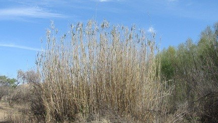 12 foot tall grass. I heard you might be a redneck if you mow your lawn and find a car. Well here in Arizona, you might find a house!