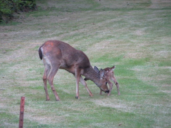 Back at camp, we find deer with a new born. We took as many pictures as we could.