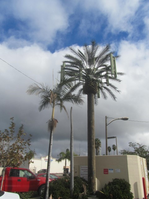 We found a Verizon Palm, it was very cool! At first glance it only looked like a healthy version of the Palm next to it.