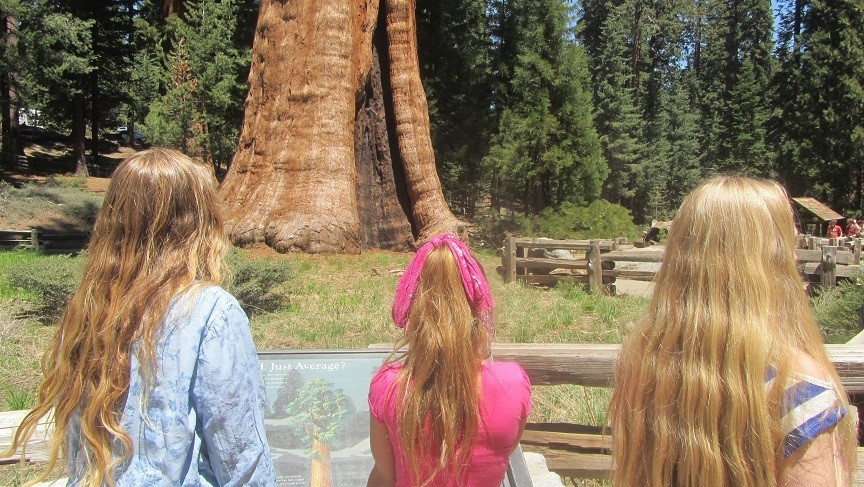 My family looking at a just average Sequoia tree at the Sequoia museum. I know the tree is just average, as the sign says so. They told us the trees make a lot of seeds, but few ever become large trees. They copied the Parabel of the Sower in Mathew 13:3 the tree was the sower, and its seeds fell on rocky soil, or on some soil, but only a few fell in good soil, with good light, and adequate water and grew healthy and strong.