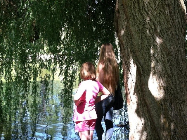 Holly and Grace are standing in the shade looking out over the pond observing a straggling wood duck as it checks out what used to be critical stopping point its journeys. First we erased his natural habitat, replacing his habitat with ponds and streams in our communities.  Now we are wiping out the urban habitat and telling the water fowl to make their own way. History does repeat itself, ask the Indians how it worked out for them. Don't feed the duck, they pollute!