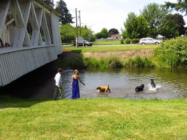 The Bride's Maid is watering the dogs before the big event