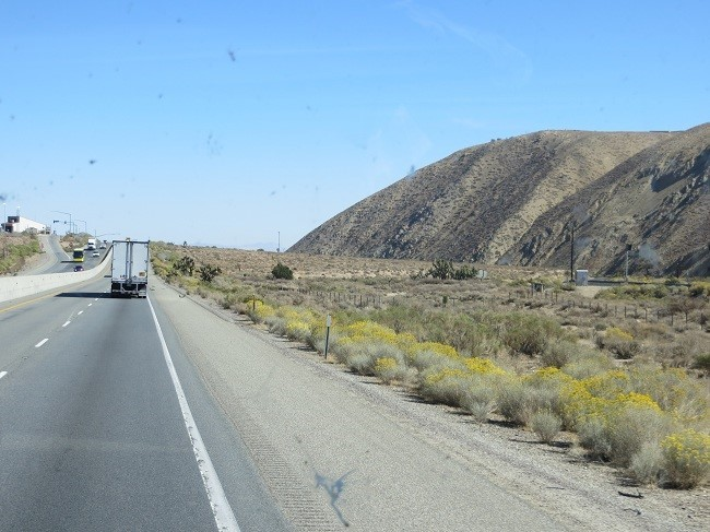 As we enter the Mojave Desert the flowers become surreal like they should part of a detailed train set layout. We are starting to see Joshua Trees, and pretty much nothing. I always dream of home with a view of nothing.